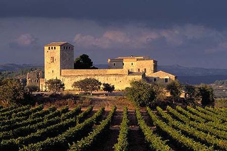 Vignes andalouses